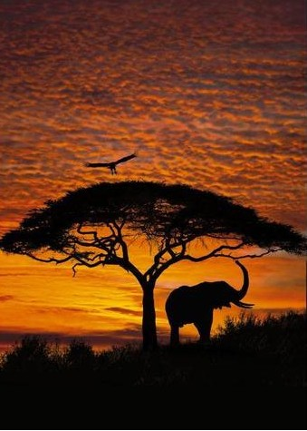 ��������� NG - African sunset